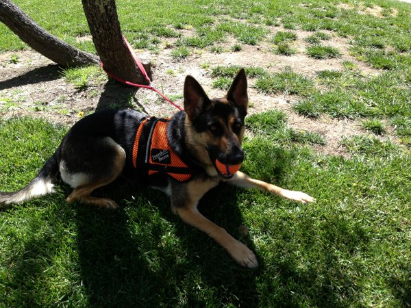 Cute Search and Rescue Dog