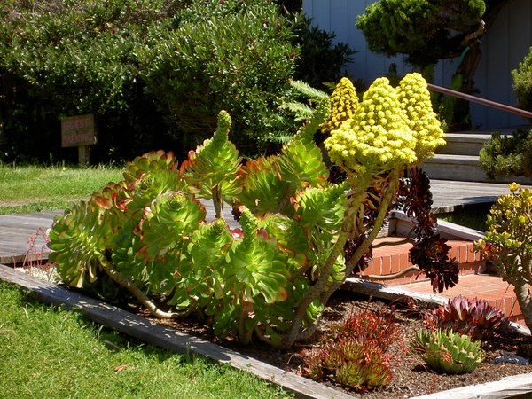 Fun plants in Mendocino