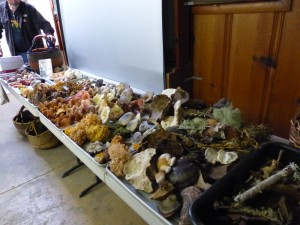 A Table of Mushrooms!