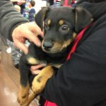A rescue dog puppy being adopted.