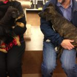 Rescue dog puppy adoption event at Pet Food Expres